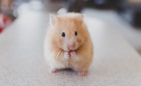 mouse praying